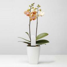 Универсальный анализатор почвы и освещенности Xiaomi Smart Flower Monitor, белый, фото 3